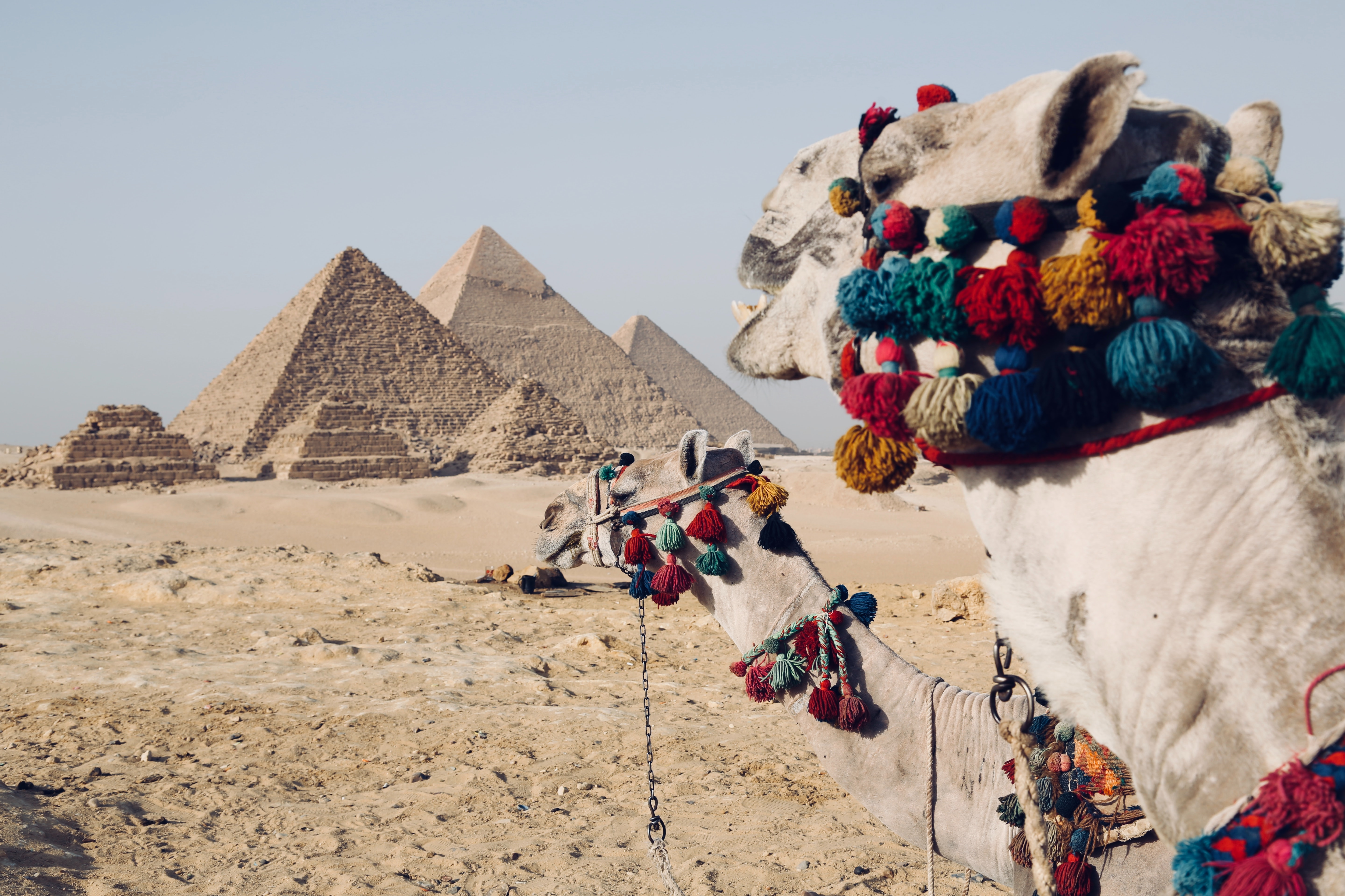 The Pyramids of Giza in Egypt with a camel.